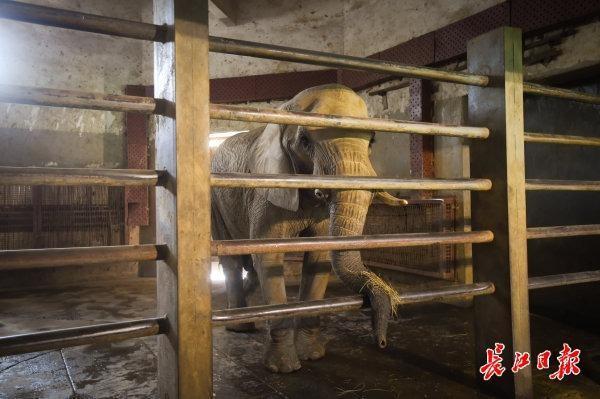 """在武汉动物园,非洲象使用暖气,河马泡在""""温泉""""里... 第2张"""