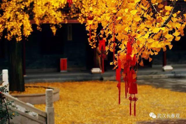 桂园佛寺和长春观暂时对外关闭。 第5张