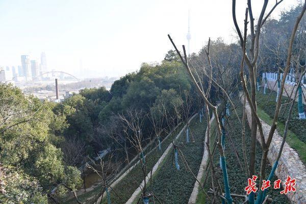 春天过后,请你来看山看山,桂山综合整治会带你回来。 第7张