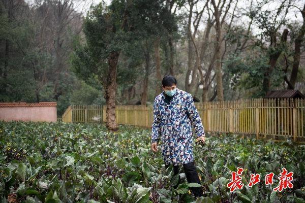 红山花菜不乏故事和普及,千年名菜的出路可以借鉴涪陵榨菜和阳澄湖大闸蟹。 第2张