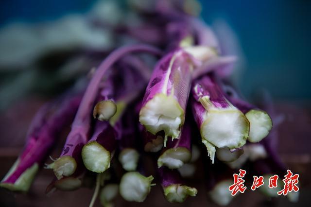 红山花菜不乏故事和普及,千年名菜的出路可以借鉴涪陵榨菜和阳澄湖大闸蟹。 第3张