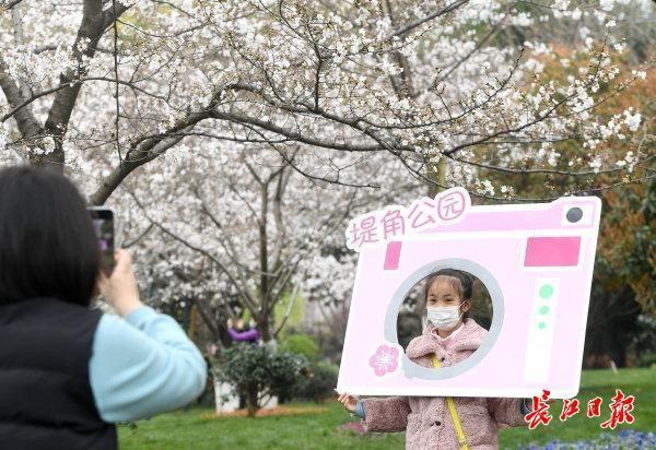 坐樱花轻轨到地角公园看著名的樱花。 第4张