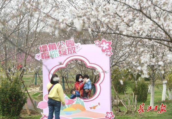 坐樱花轻轨到地角公园看著名的樱花。 第3张