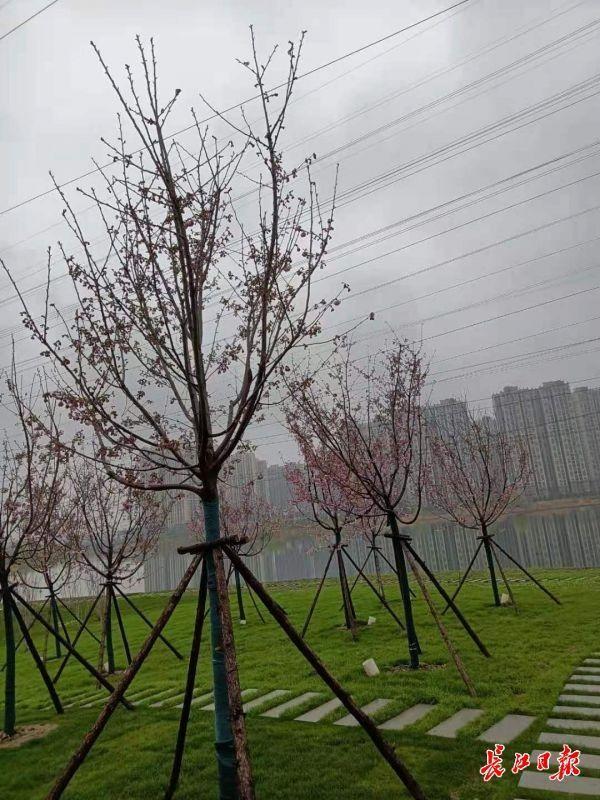 植树节能吗?官方回复来了。 第2张