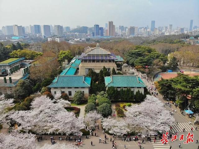 武汉春光灿烂,百花齐放,引来全国赏花客争相。 第7张