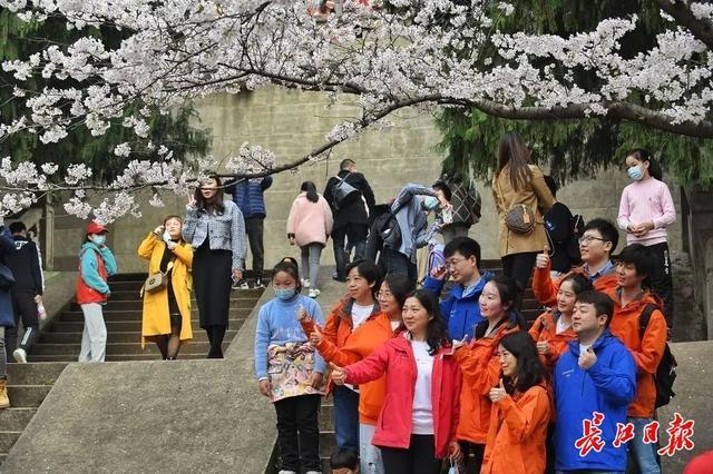 武汉春光灿烂,百花齐放,引来全国赏花客争相。 第11张