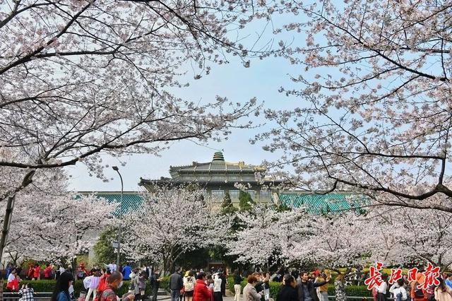 武汉春光灿烂,百花齐放,引来全国赏花客争相。 第13张