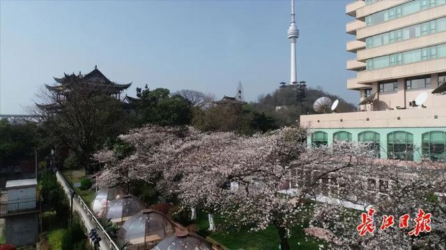 武汉春光灿烂,百花齐放,引来全国赏花客争相。 第16张