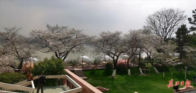 武汉春光灿烂,百花齐放,引来全国赏花客争相。 第18张