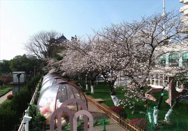 武汉春光灿烂,百花齐放,引来全国赏花客争相。 第17张