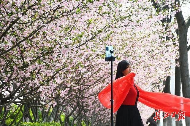 武汉春光灿烂,百花齐放,引来全国赏花客争相。 第25张