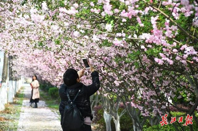 武汉春光灿烂,百花齐放,引来全国赏花客争相。 第28张