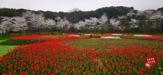 东湖樱花园里有一朵五瓣花,天才看得见。 第3张