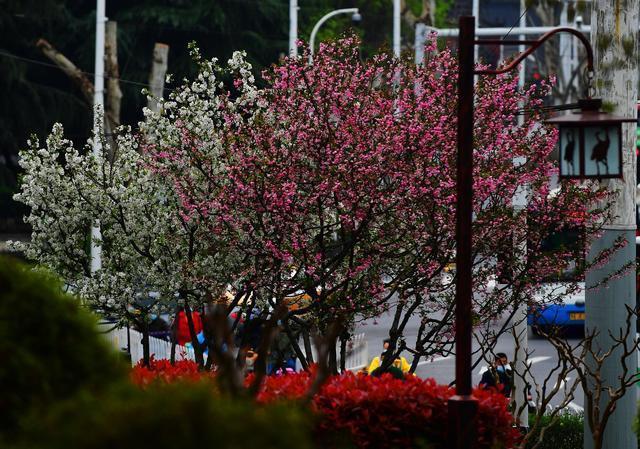 早晨太阳出来了!春分吃春菜放风筝的时候。 第1张