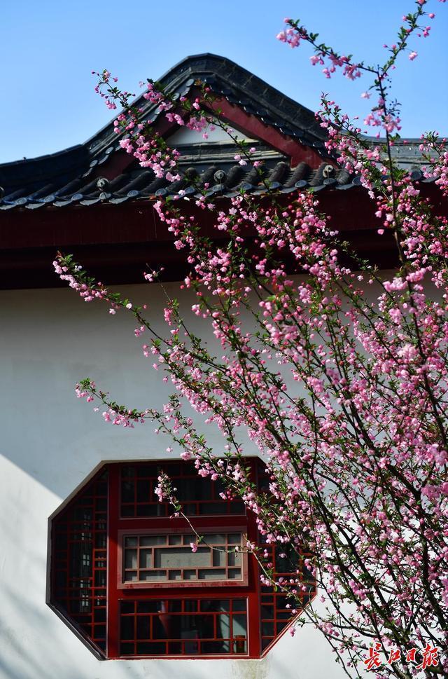 来武汉欣赏海棠的时候!春分时节开启连晴模式 第2张