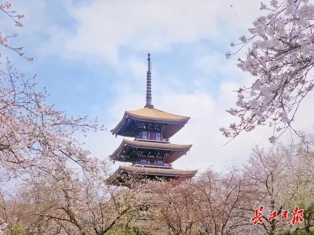 听江汉关钟声,欣赏武汉樱花,全国游客在武汉见面。 第2张
