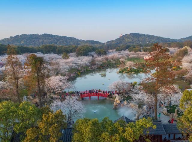七十八万人次六成外地客,东湖之樱点亮英雄之城。 第6张