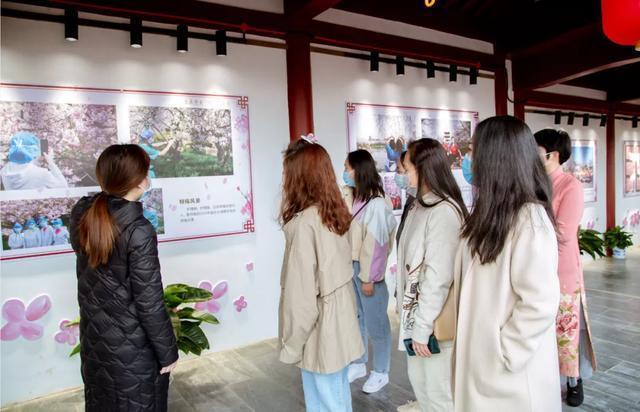 七十八万人次六成外地客,东湖之樱点亮英雄之城。 第16张