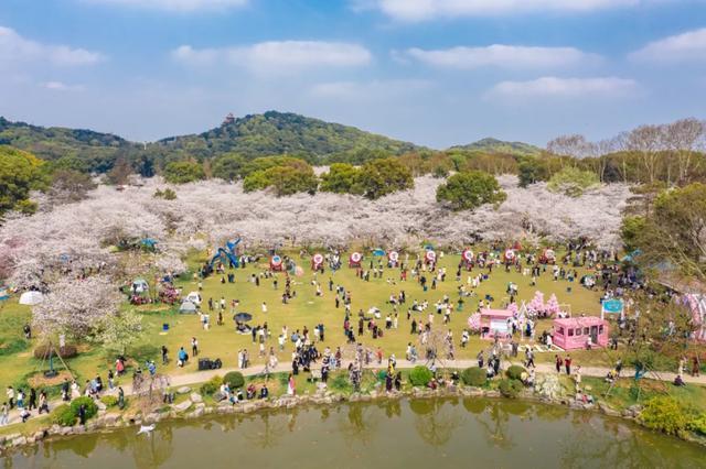 七十八万人次六成外地客,东湖之樱点亮英雄之城。 第24张