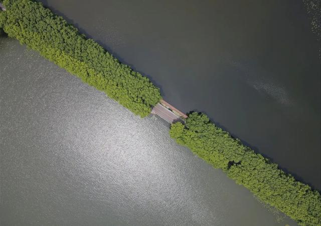 武汉河湖湿地哪个最美?这次你算了! 第4张